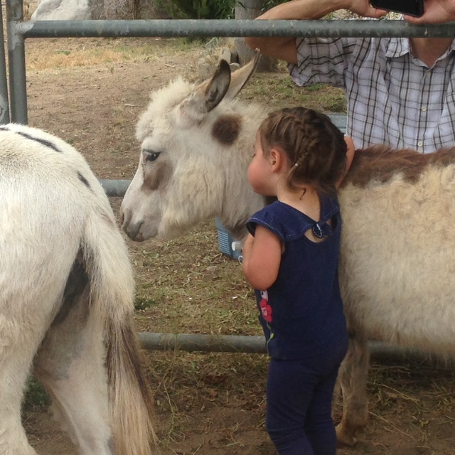 Kids Petting Zoo